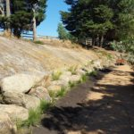 Dirtglue regular non-toxic long lasting soil  stabiliser  for embankments